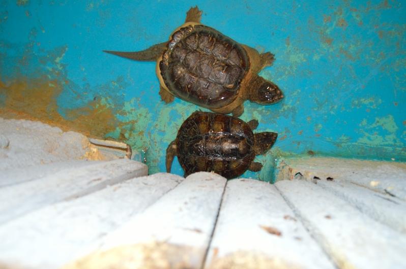 lara-vazquez-madlla-blog-turtles-safari-mad