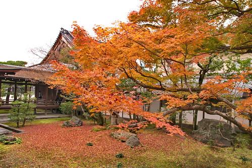 【写真】紅葉 : 仁和寺