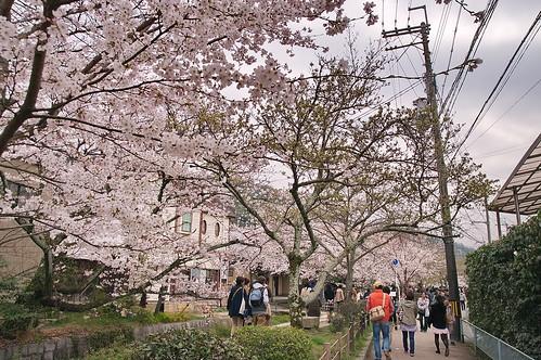 【写真】2013 桜 : 哲学の道/2018-12-24/IMGP9242