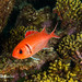 Squirrelfish - Bonaire 2013