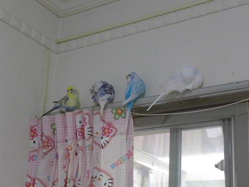 鳥寶寶們睡午覺