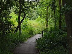Askham Bog Nature Reserve