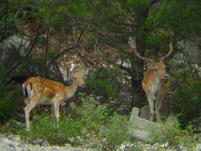 Kroatien-Bodul 2006_17