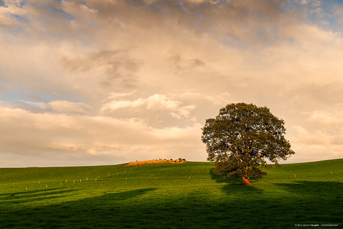 autumn light sunset england sky sunlight green nature grass oak nikon skies shadows sundown shade staffordshire d800e nikond800e