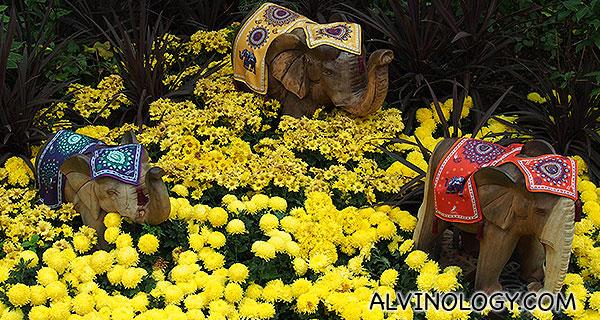 Elephants in chrysanthemum flower bed