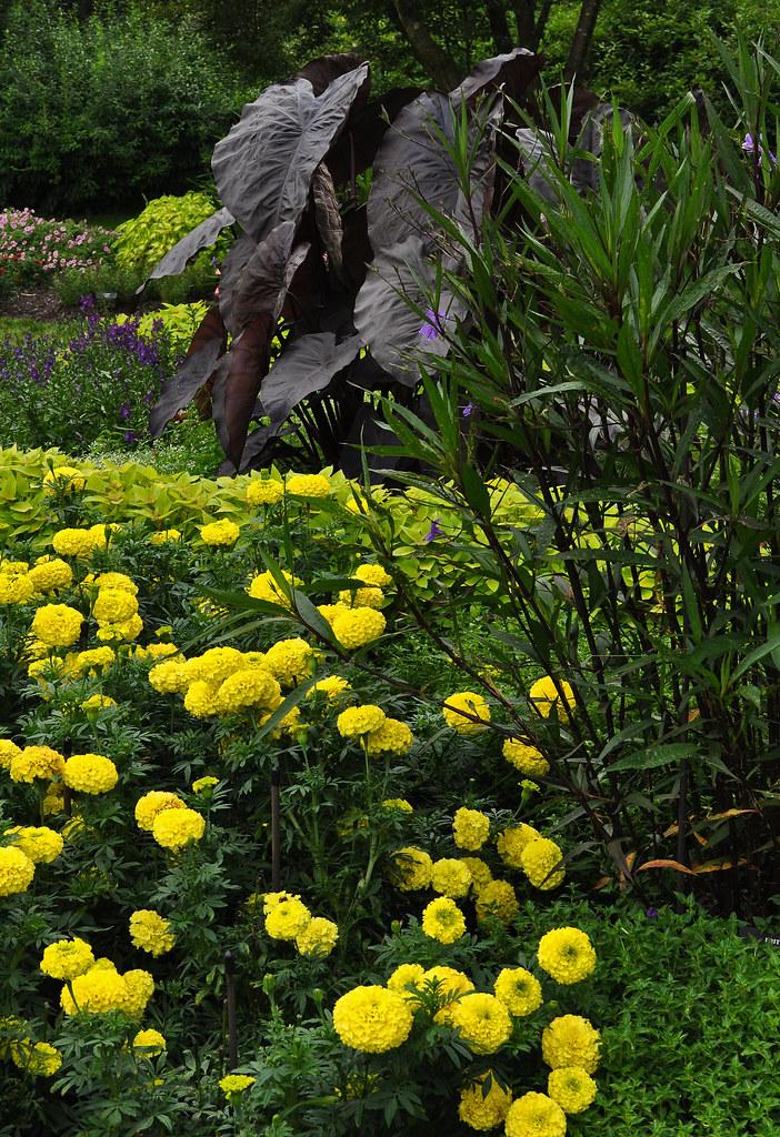 Idea Garden (2)
