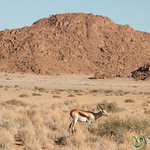 Sossusvlei Lodge, Wildlife - Namibia