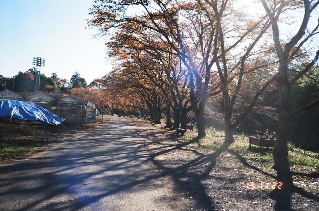 morning stroll 3