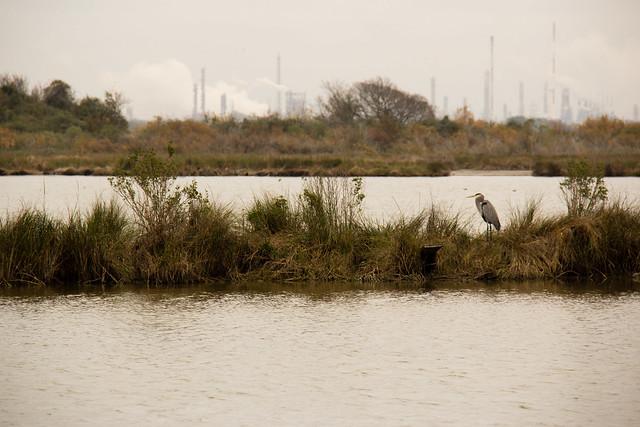 San Jacinto battleground wetlands