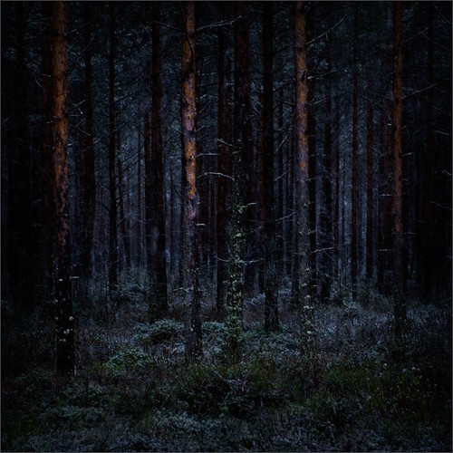 winter color night forest photoshop suomi finland dark square woods nikon scenery kuopio 2014 ok6 d700 ollik joutenjärvi 20140107 work3653