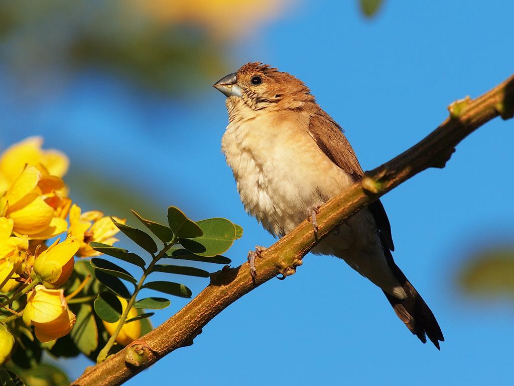 египет птицы фото