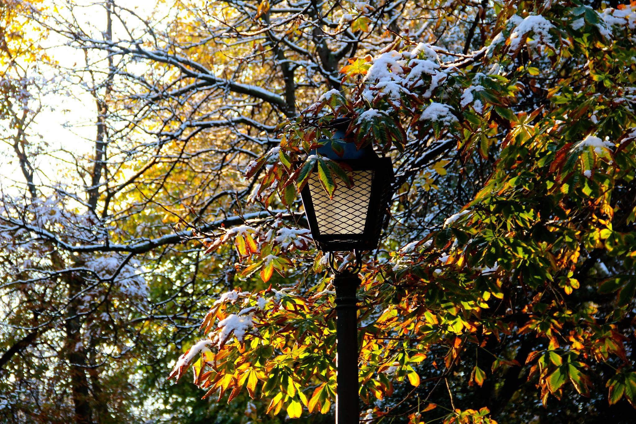 Estampa invernal. Autor, Sabersabor.es