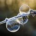 Frozen bubbles - Explored 17/03/14 by Anniison