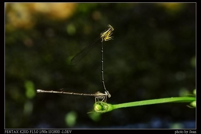 柴山 + 鳥松溼地之生態隨拍