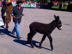 llama(0.0), pack animal(0.0), horse(0.0), camel-like mammal(0.0), animal(1.0), donkey(1.0), mammal(1.0),