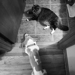 "Dear Diary: Dog and cat are all like ""Tornado sirens aren't going off anymore, can we go back outside?!?"" #happyhound #happycat #wtf #neardeathexperience"