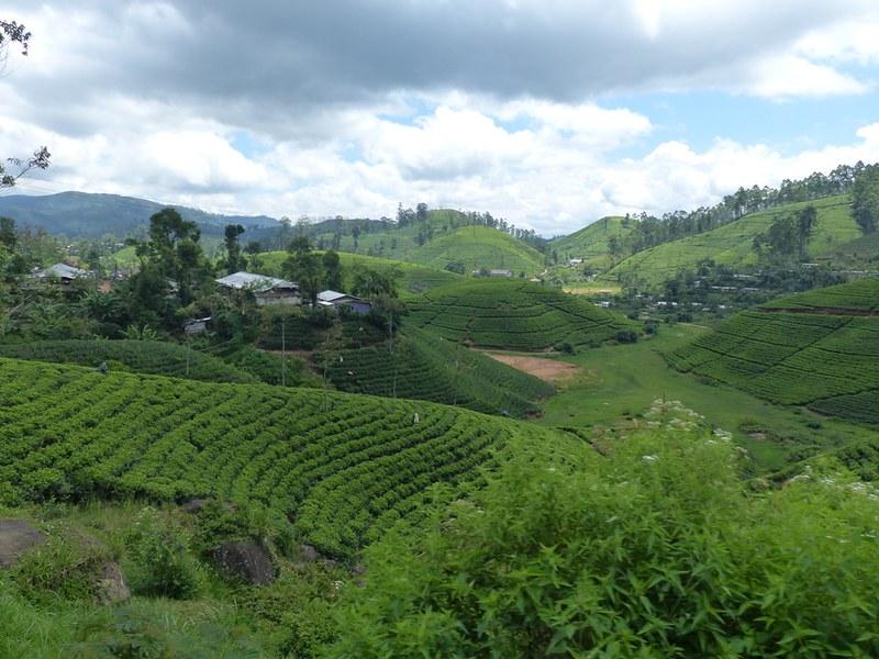 sri lanka train scenery islands around the globe
