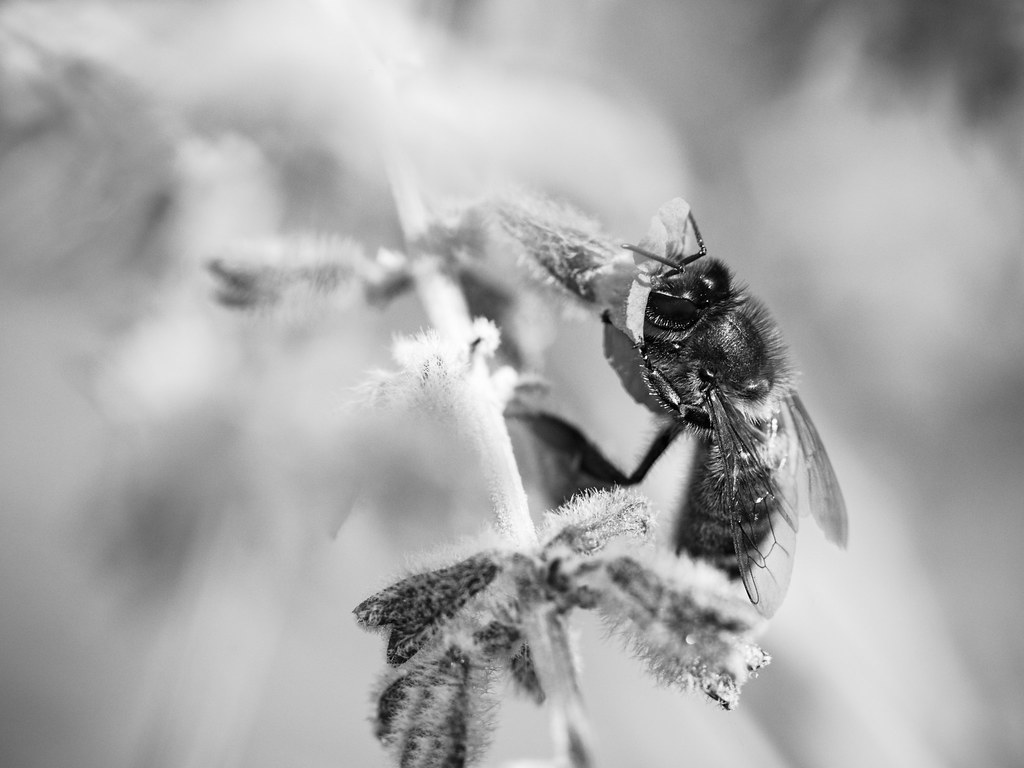 Pour un peu de nectar. 19776437123_30cc30bb19_b