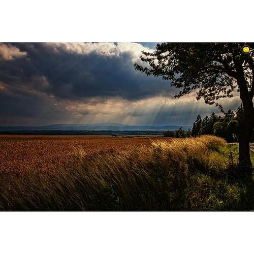 #herrlicher #Blick auf den #harz von #dardesheim #gutenmorgen #wunderschön #getreidefeld #baum #himmel