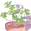 Potted Oxalis Plant - ink and watercolor