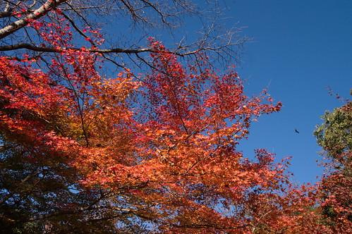 【写真】2012 紅葉 : 哲学の道/2020-10-03/IMGP7372