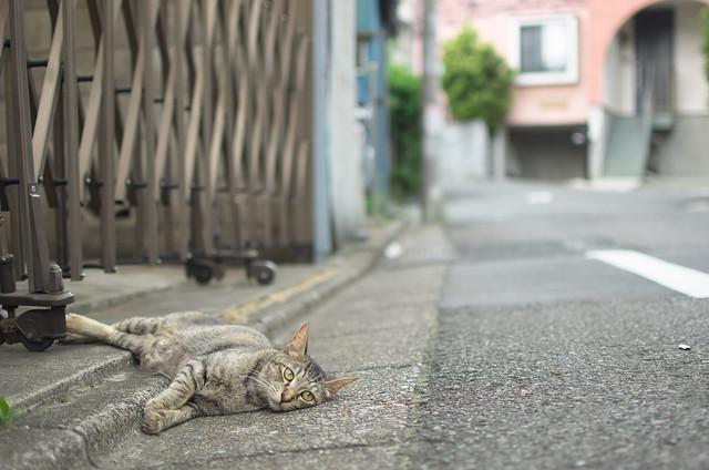 東京路地裏散歩 2013年7月14日