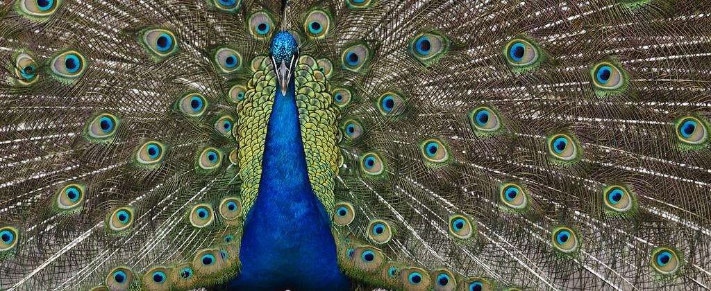 IMAGE: http://farm4.staticflickr.com/3749/9352164055_6fa31ffe7e_b.jpg
