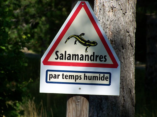 Warning, lizards!
