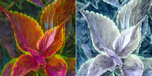 Image of flower before and after using Topaz ReStyle