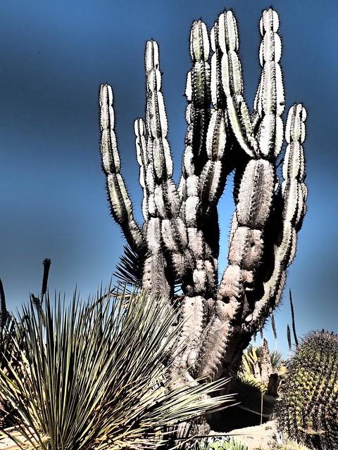 Cactus - Desert Garden Balboa Park - San Diego California