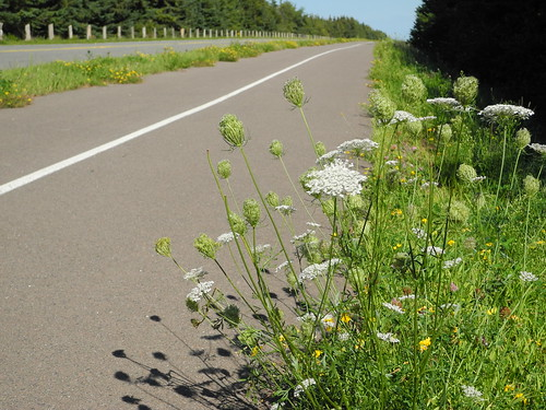 View from a bike lane.  Gulf Shore Parkway - PEI National Park