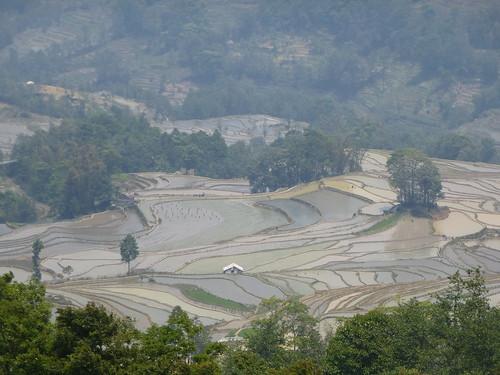 Yunnan13-Yuanyang 16-Qingkou (14)