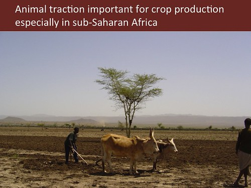 Slide 10: Animal traction