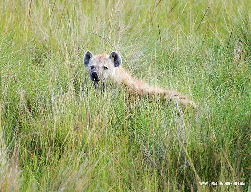 Kenia - Masai Mara 20