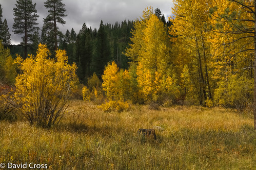 california autumn fall northerncalifornia landscape meadow autumnleaves highway89 sierranevadarange coldcreek sierracounty canon7d canon1585mmusmis lightroom5 topazsw donnerscenicbyway
