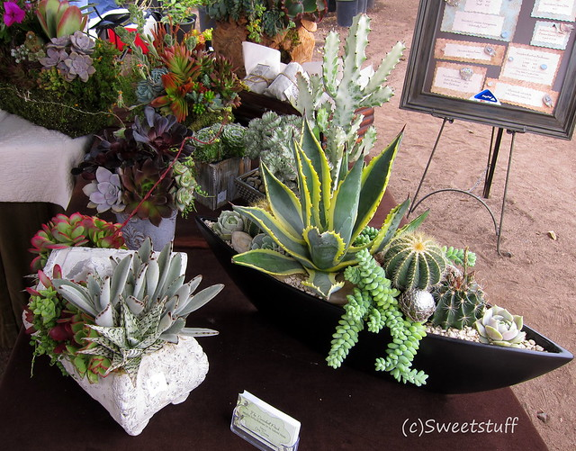 Succulent Perch pottings