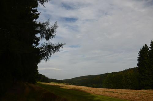 Am Waldrand wird Landwirtschaft getrieben
