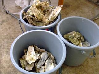 塩釜・牡蛎
