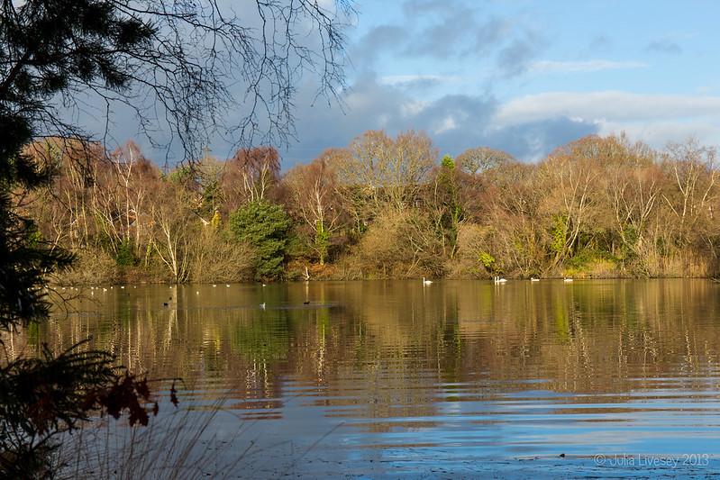 Creekmoor Ponds in the January sun