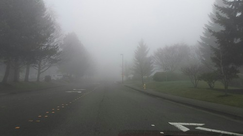 Foggy day commute, street, arrow, trees, Bellevue,Washington, USA by Wonderlane