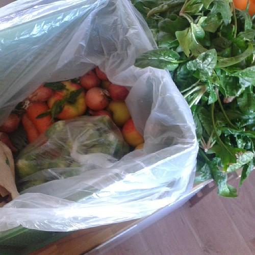 Gemüsekiste angenommen #12v12