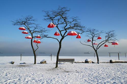 Umbrellas Hanging on Trees