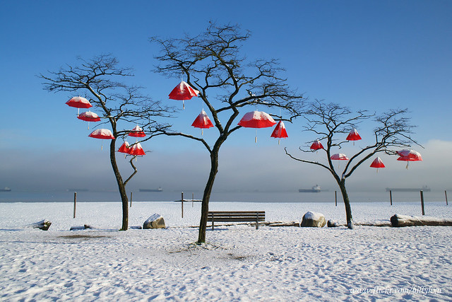 Umbrellas Hanging on Trees
