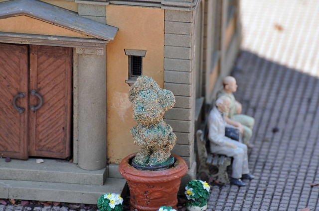 Miniature Railroad topiaries