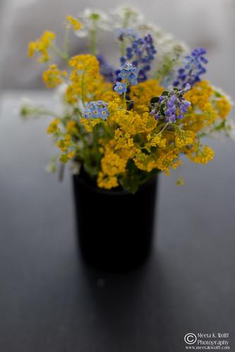 Wild Field Flowers (0013)