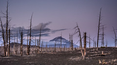 Udina behind Dead Forest