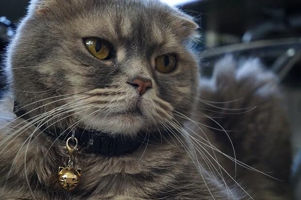 170309 神々しい猫