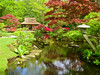 The Japanese garden of The Hague