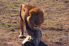 2013.02.13 Taigan safari-park