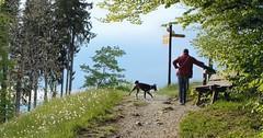 Cestování se psem ze zemí EU do Švýcarska